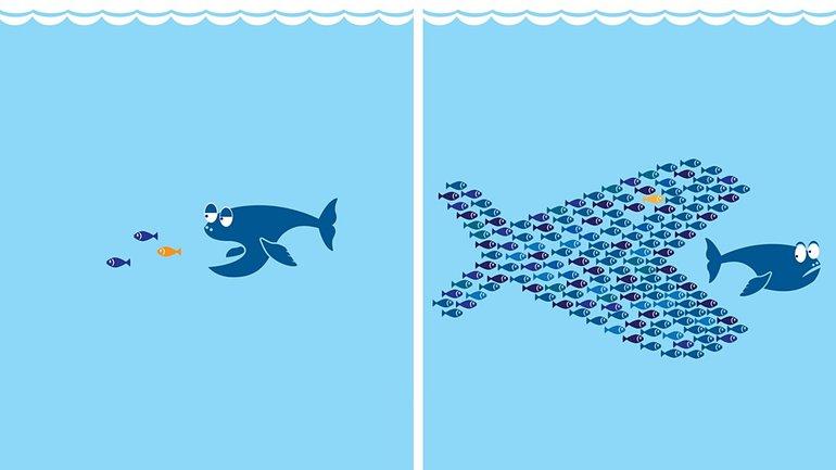Fisch Schwarm Organize gemeinsam stark
